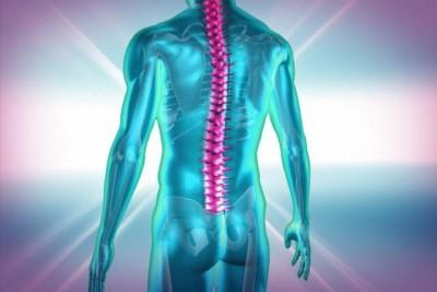 Sinirbilimciler ışıkla kas hareketlerini kontrol ettiler