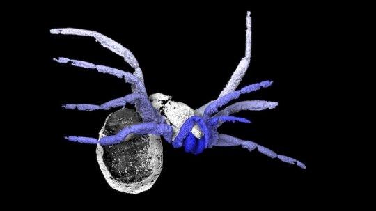 305 milyon yıllık 'örümceklerin atası' fosili keşfedildi