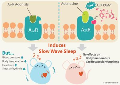 Uykusuzluk tedavisine yeni bir yaklaşım