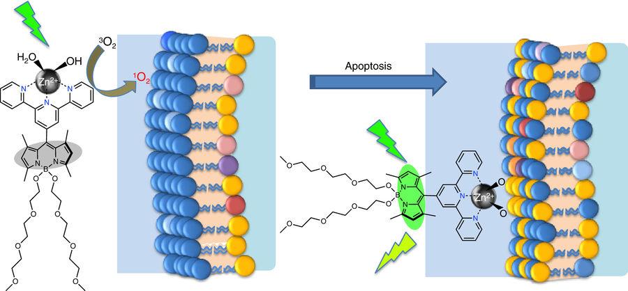 Kanser tedavisine yönelik moleküler otomat