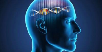 Beyindeki zekâ ile ilişkili gen bağlantıları ilk kez aydınlatıldı