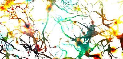 Yeni bir çalışma, bazı beyinlerin neden daha zeki olduğunu açıklıyor