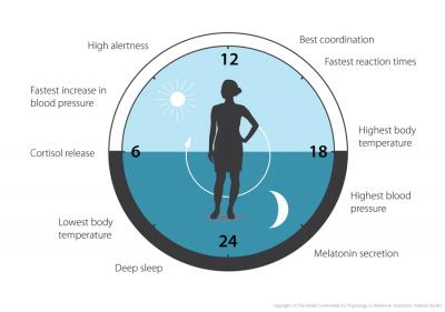 Nobel yolundaki biyolojik saati anlamak