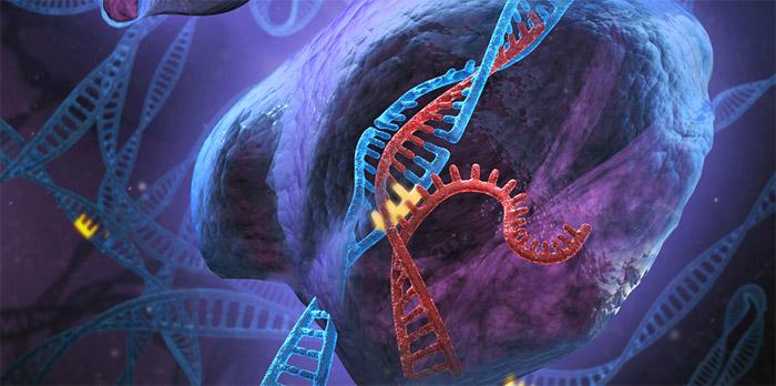 RNA'lar CRISPR'ın kıskacında