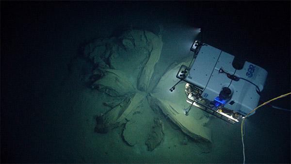 Derin Deniz Kaşifi (Deep Discoverer)