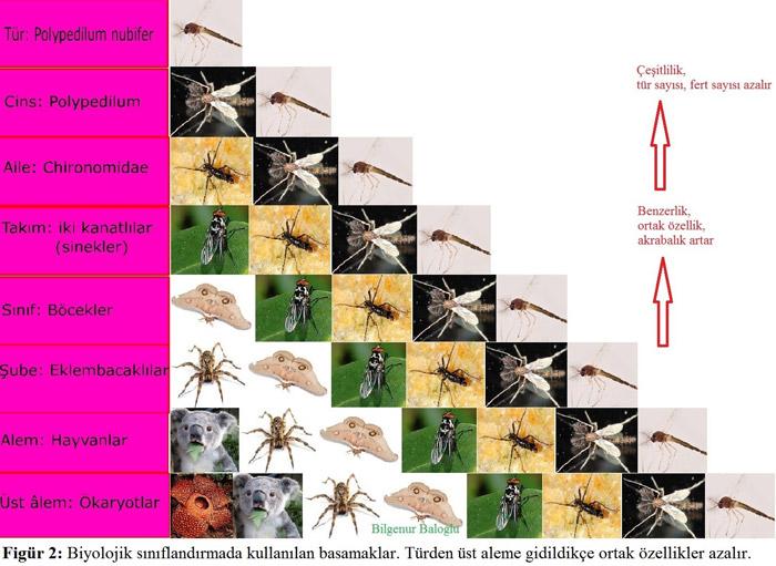 Laboratuvarda geçen 4 yıl: Titrer sinekler, dökülen pek çok gözyaşı ve yeni türler