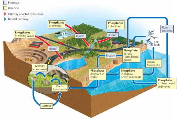 fosforun-izledigi-dogal-yollar