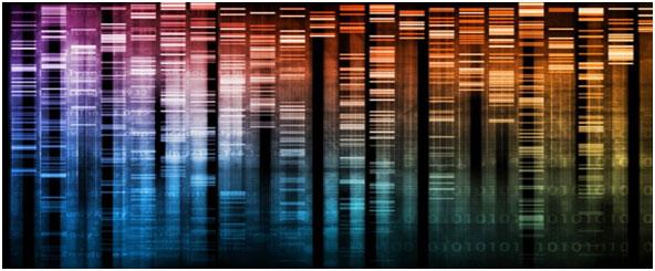 Genetik hastalıklar ve akraba evlilikleri