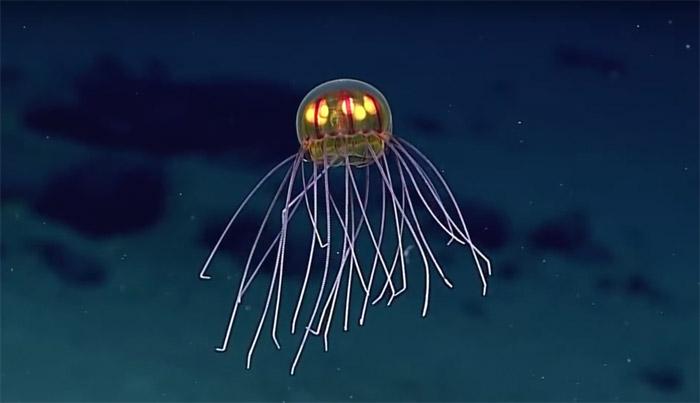 Derin denizlerde ilginç keşifler ve Denizler Altında 20.000 Fersah