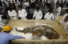 jp-mamut