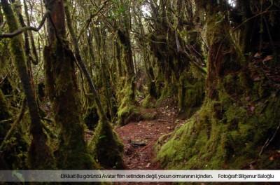 Malezya'da bir Avatar ormanı
