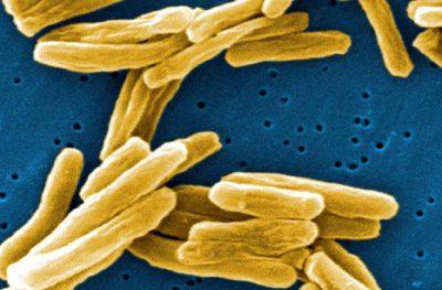 Dünya'da 1 trilyon mikrobiyal türün yaşadığını tahmin ediliyor