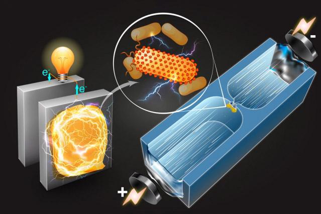 Elektrik üreten bakterilerin tanımlanması