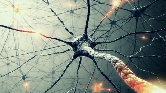 Yeni bir nöron tipi keşfedildi