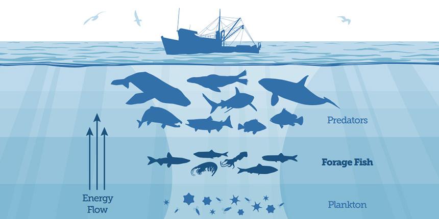 Okyanuslardaki balık sayısı hızla azalıyor
