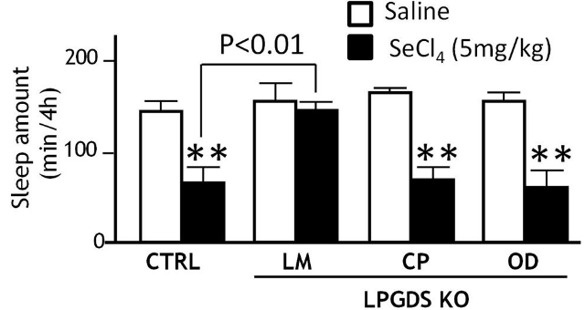 Leptomeninksler: Uyku oluşturucu Prostaglandin D2'nun beyindeki ana kaynağı