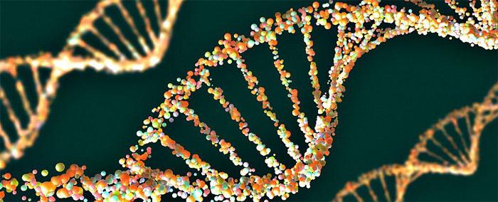 10 yıl içerisinde sentetik insan genomu yapılması planlanıyor