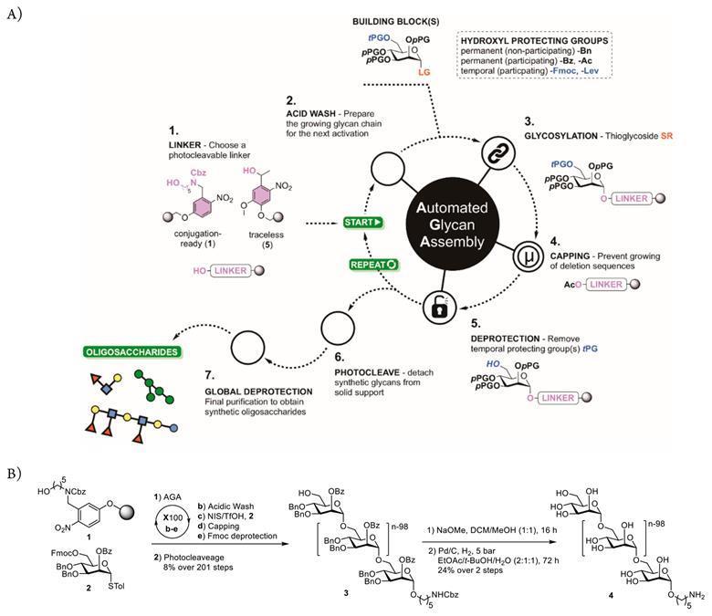 100 moleküler üniteli şeker, en uzun sentetik karbonhidrat için rekor kırdı