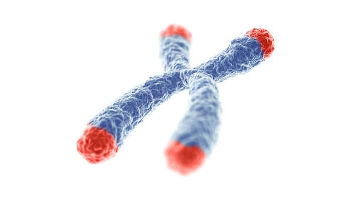 Kromozomlarımızı Koruyan En Önemli Parçamız: Telomer