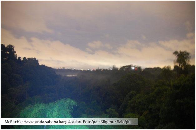 Tropik yağmur ormanında bir gece
